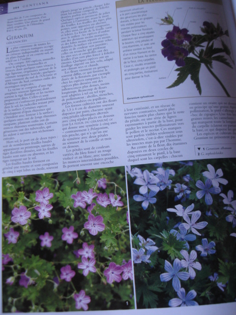l'encyclopedie des plantes vivaces - gallimard 585821IMG3185