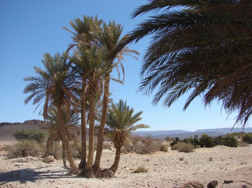 Le Grand Sud du Maroc - II 585930117