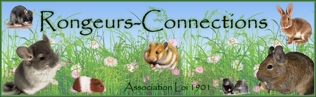 Association Rongeurs-Connections