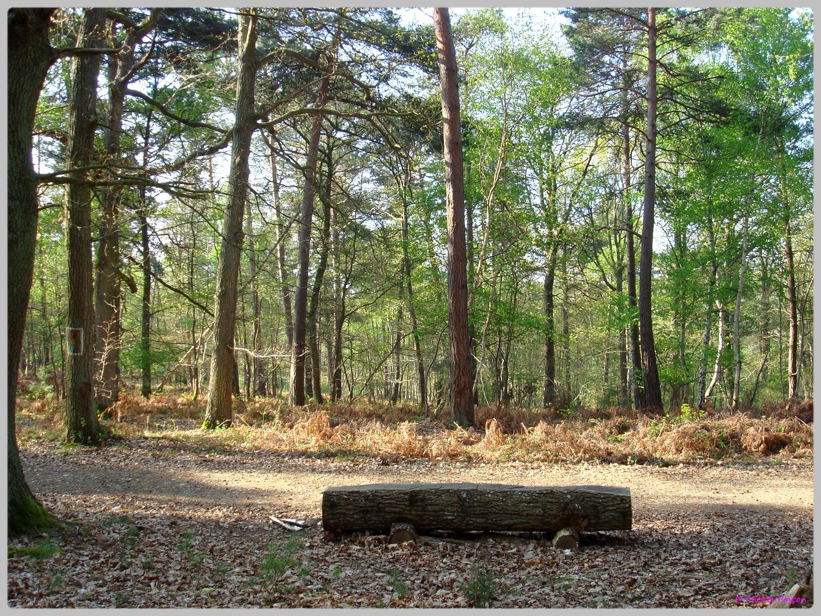 [fil ouvert] la forêt dans tous ses états - Page 13 598012DSC012637