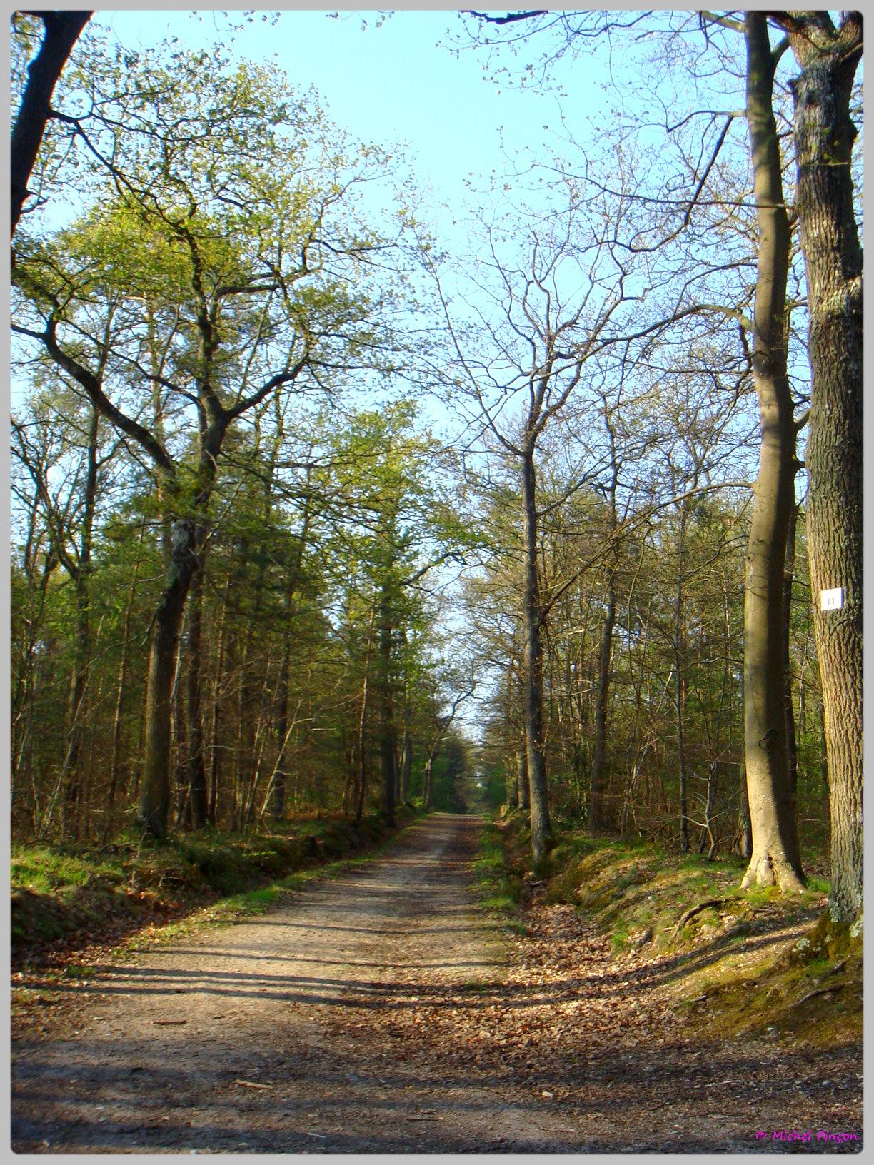 [fil ouvert] la forêt dans tous ses états - Page 13 598574DSC012612