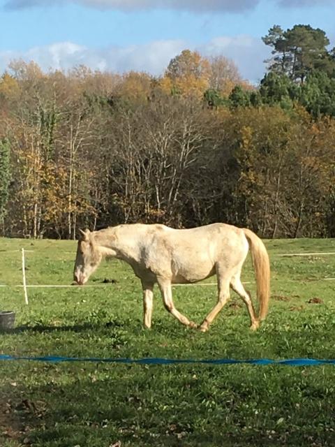 Estimation de nos chevaux ! 599562IMG1932