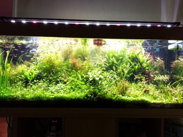 Mes (plus) de 60 plantes dans mon 240 litres - Page 3 60172420140201194451