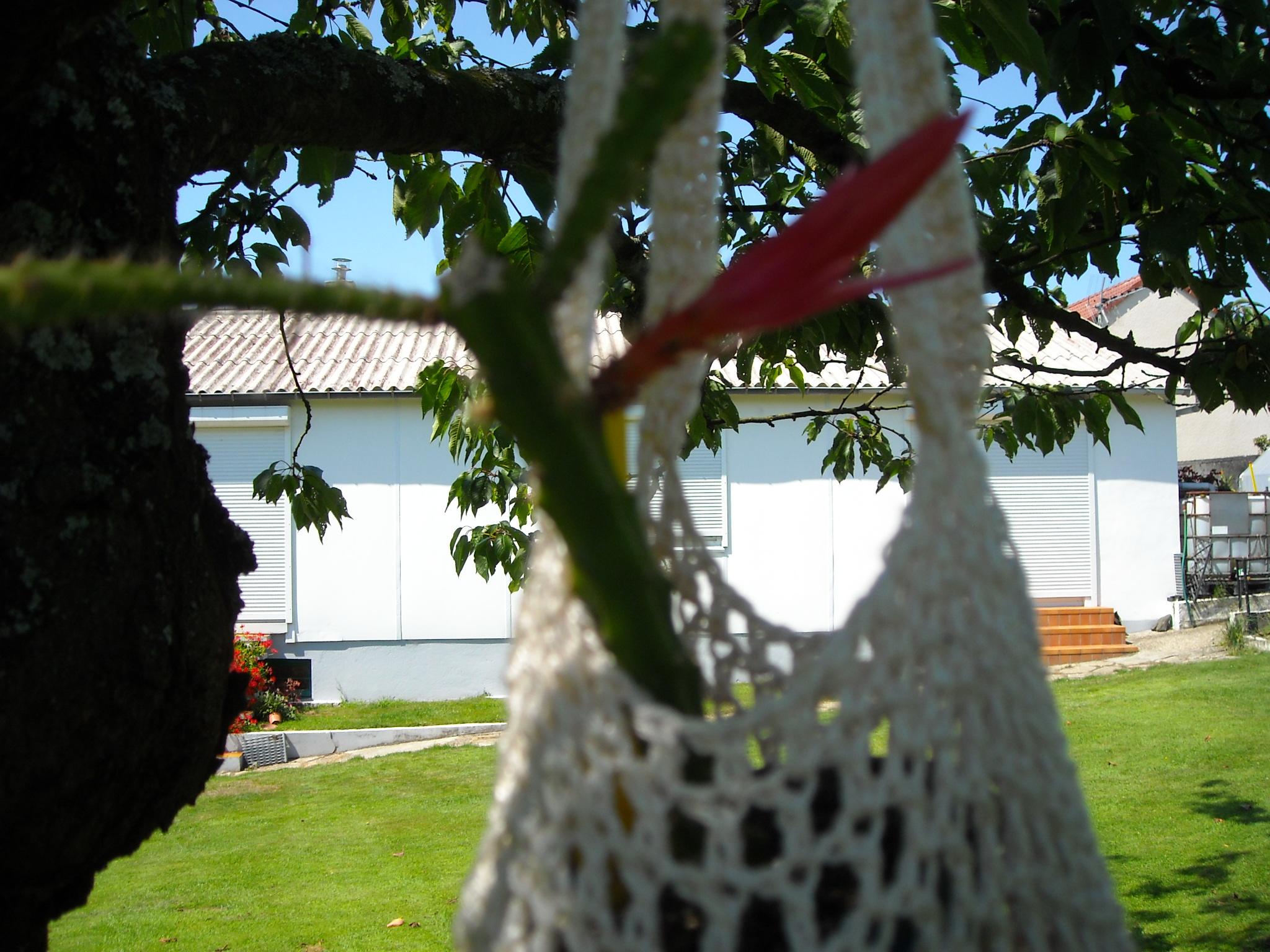 aporocactus beautg 602451potetaporoc006