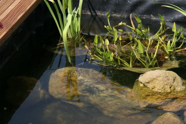 bassin 5/6 m3 semi enterré avec cascade et déversoir 607411IMG3102