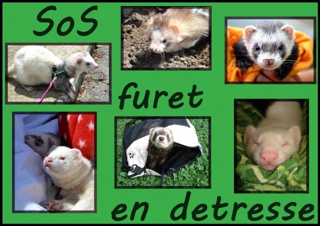 Le Forum SOS Furet en Détresse.
