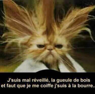 Humour en image ... - Page 37 614548chat