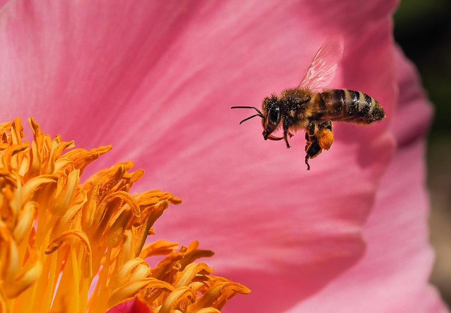 petites abeilles / test OM10 617538O040328