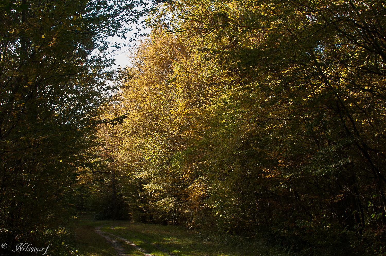[fil ouvert] la forêt dans tous ses états - Page 8 617949DSC0002