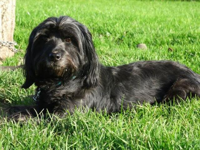 KENZO - cairn terrier/westie 10 ans (6 ans de refuge) SHPA à Le Havre (76) 61834714598638601161640217356860450181596206314n