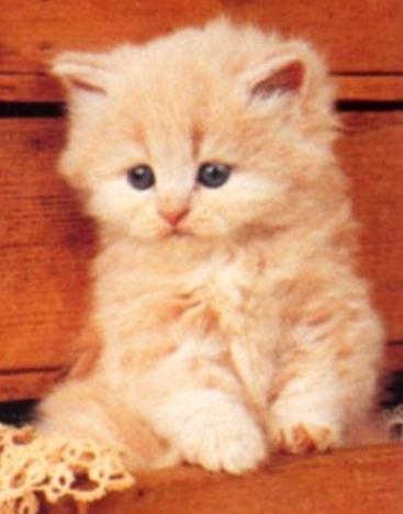 Tubes chats de ma creation 619475TrMelgibsone12