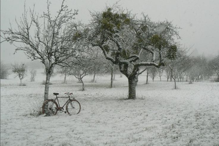 Le Koup de Koeur de Khunsa  Janvier 2016  la photo de Brocker's vélo. 620432Capturedcran20160208211447