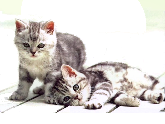 Mes tubages Chats 629087TubMel33
