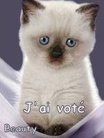 LES VOTES POUR LE FORUM 630427jaivot2