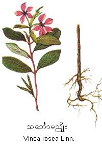 Les fleurs (ou plantes ) contre le cancer. - Page 2 632218op449