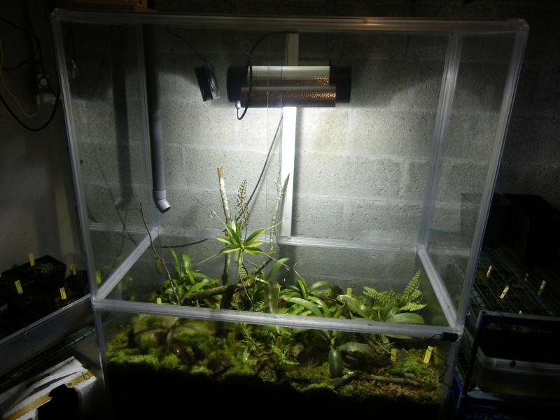 Mon terrarium highland 634430IMGP1830