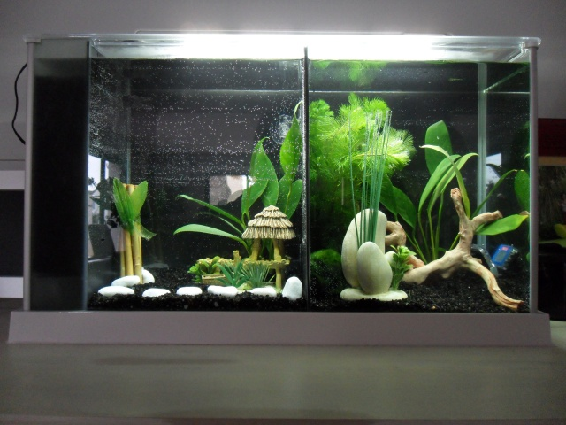 Nano aquarium Fluval Spec V 19L [mise en eau] 635561SAM1823