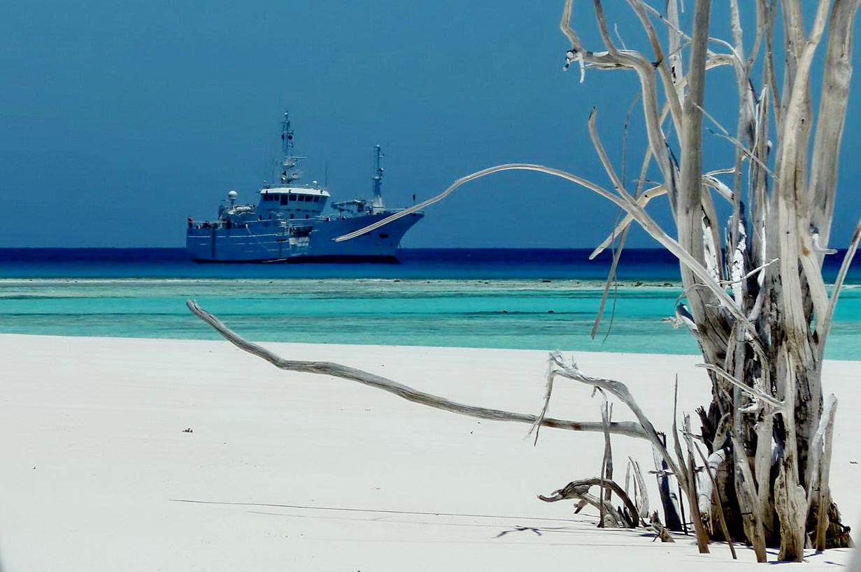 [Campagne] Iles éparses du canal du Mozambique - Page 13 635776P1060576