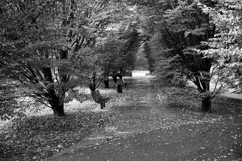 jcr paysage noir et blanc - Page 10 636142klju