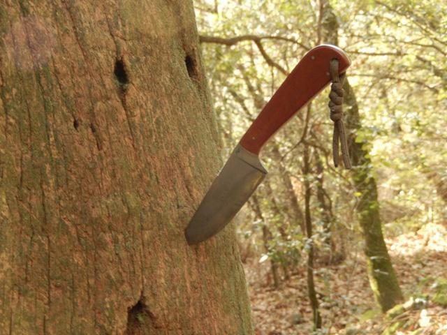 Petite ballade à travers bois... 637069DSCN0082Copier