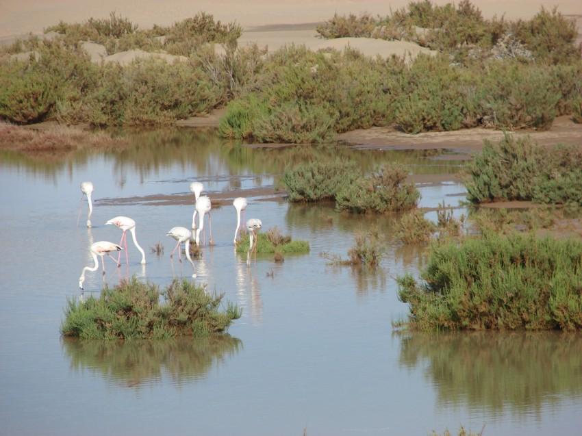 Le Grand Sud du Maroc - II 640207003