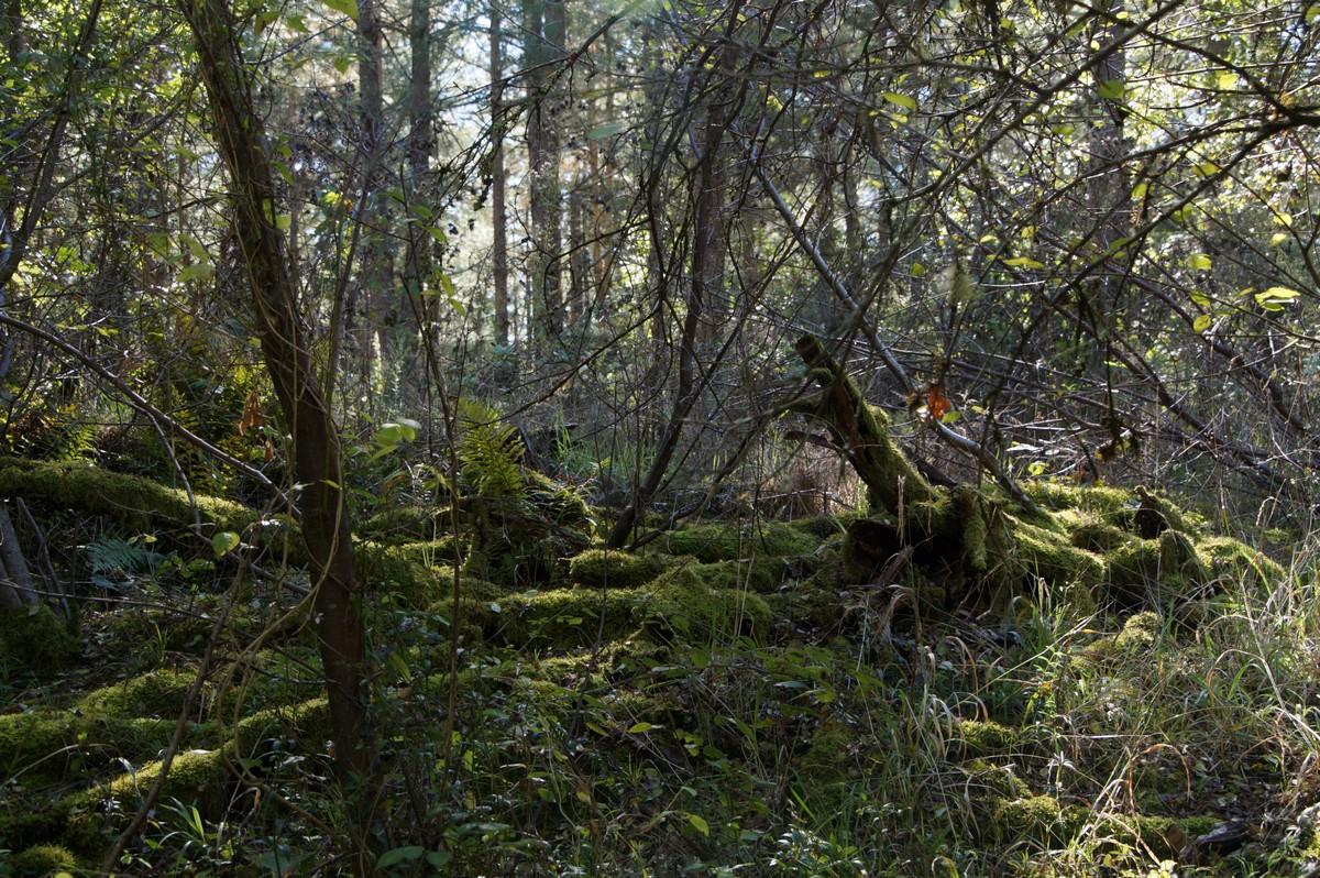 [fil ouvert] la forêt dans tous ses états - Page 15 641750DSC07738