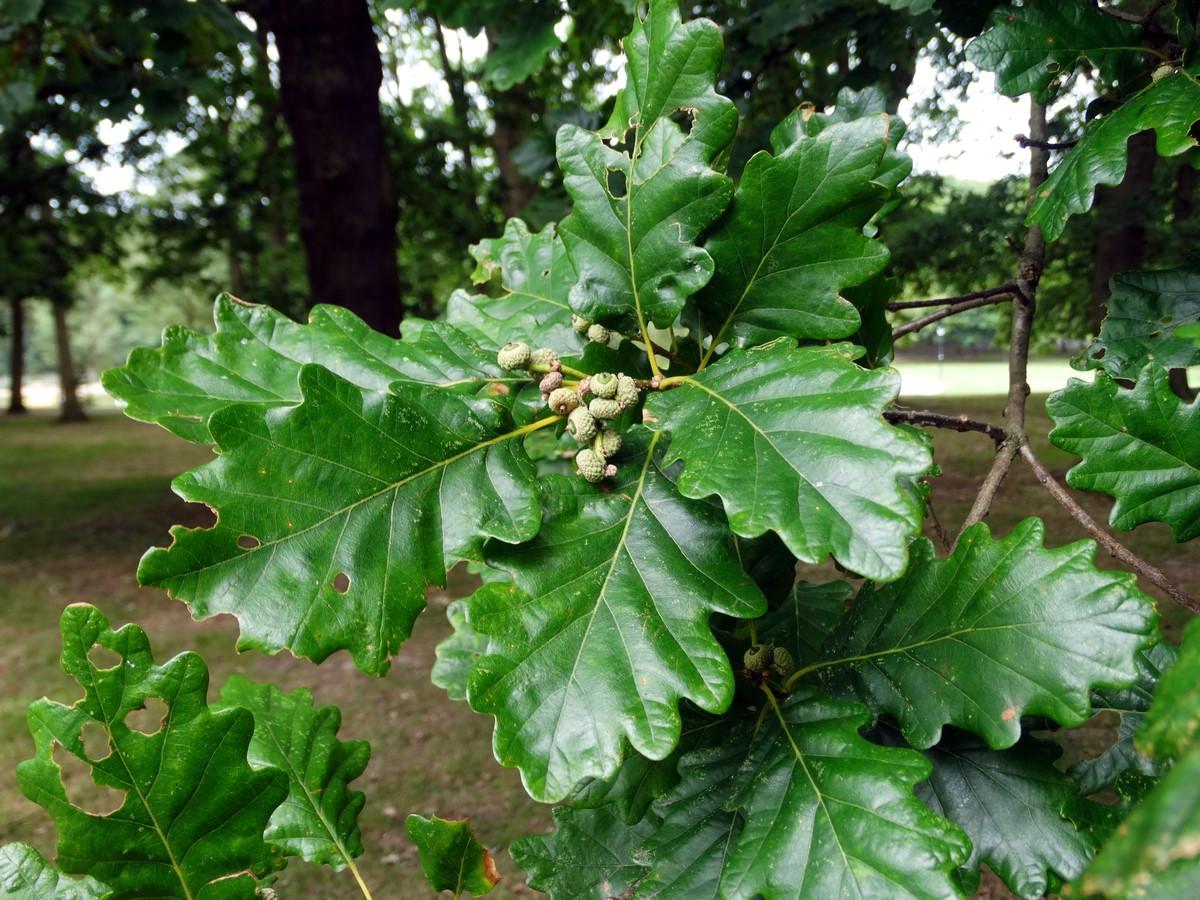 [Fil ouvert] Fruit sur l'arbre - Page 7 642151005Copier