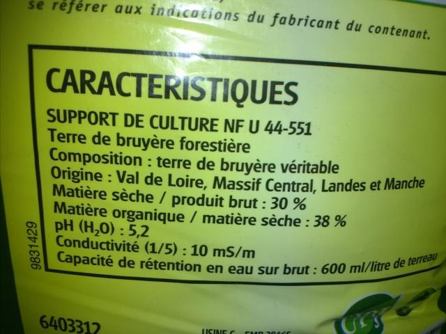 """Nouveau projet : Bac de 64 litres, """"naturel"""" méthode Walstad - Page 3 642873IMG1576"""