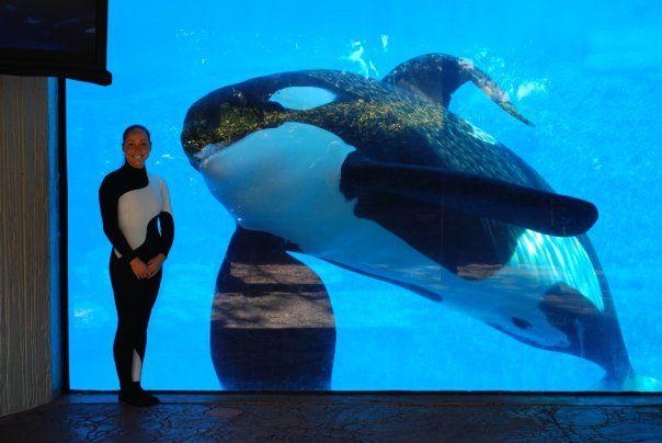 [Photos] Orques aux vitres 643668tilikum33