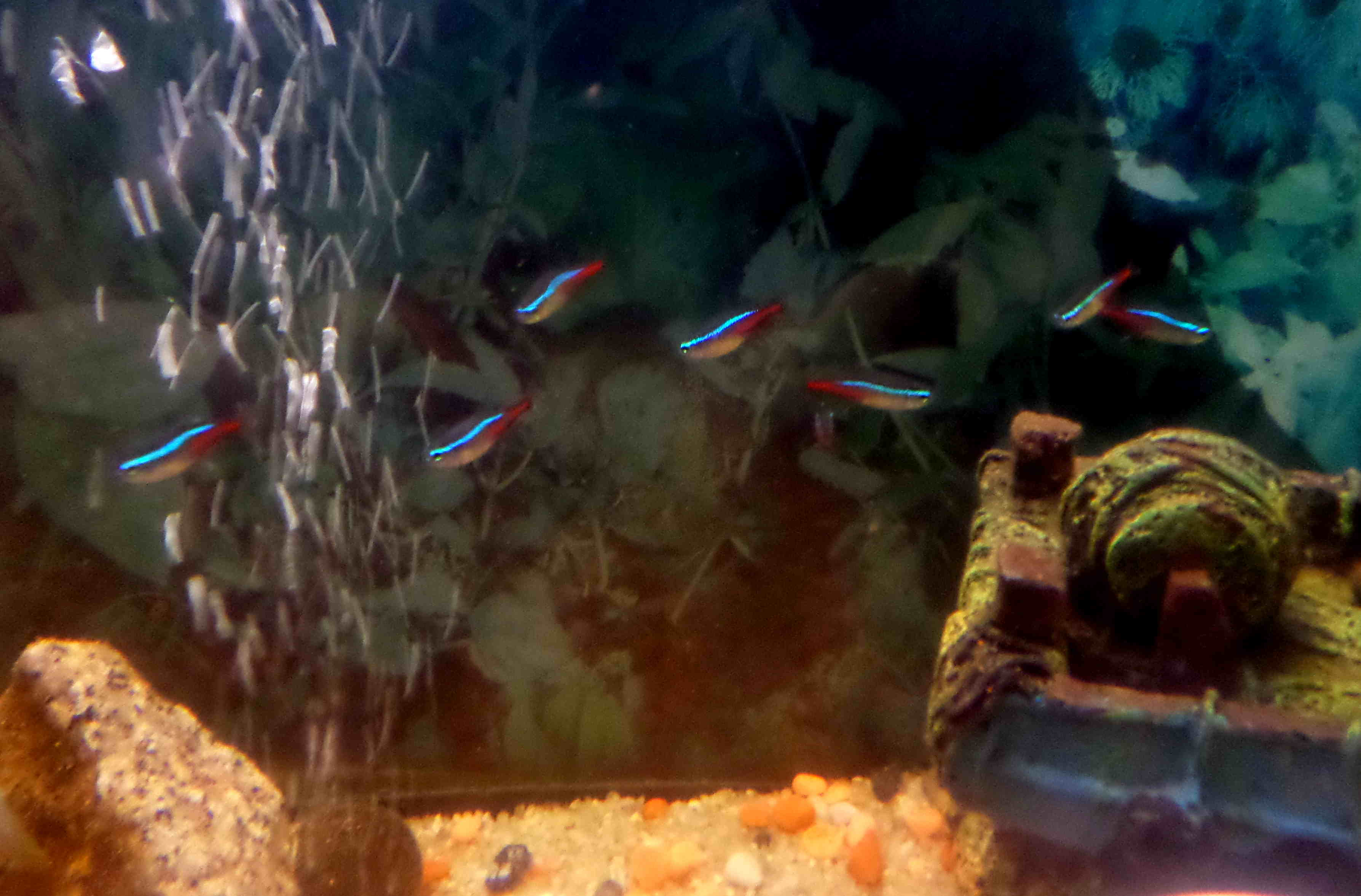 Donne des poissons 649693SAM3978