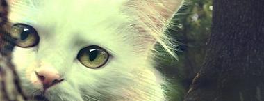 Warriors Cats 649927ImagePA