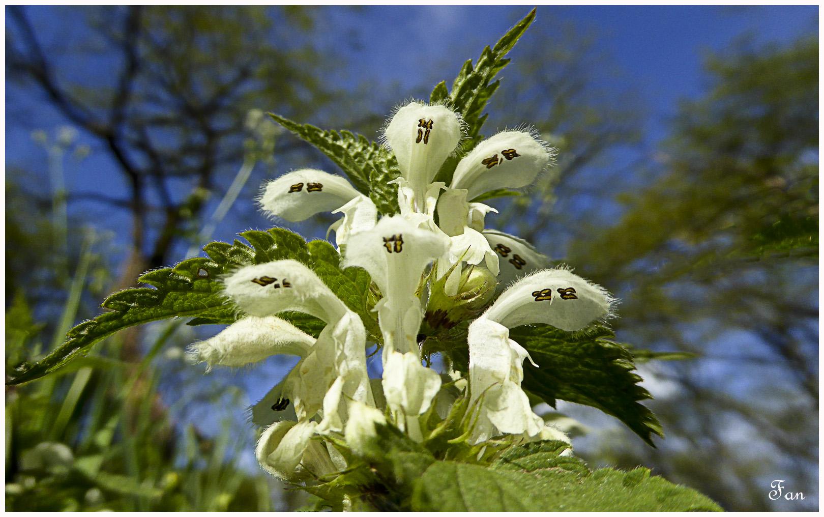 Fleurs de mes chemins - Page 2 650693P1020768bis