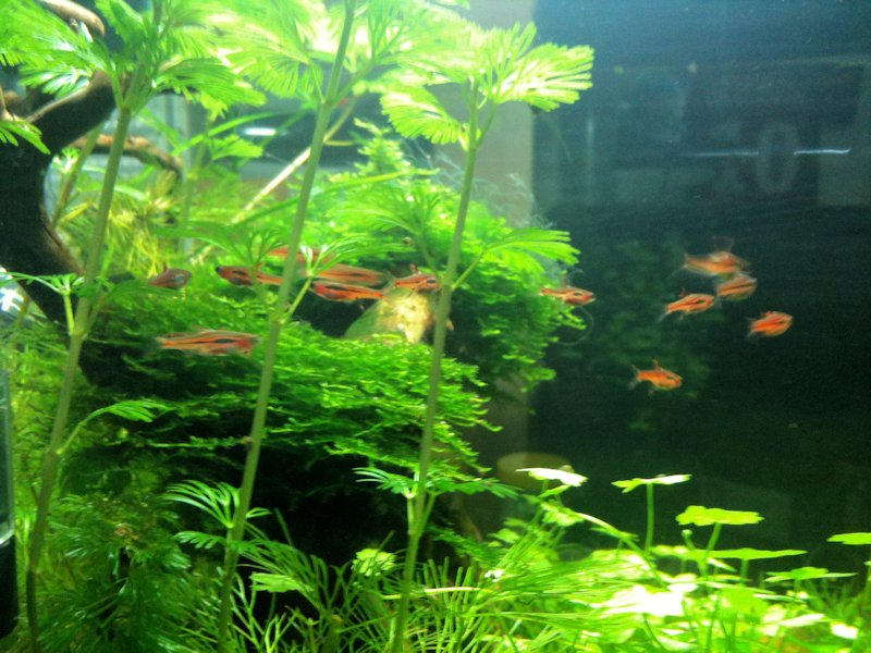 Mon Scaper's Tank 50L Aquascaping - Page 2 656805IMG0389
