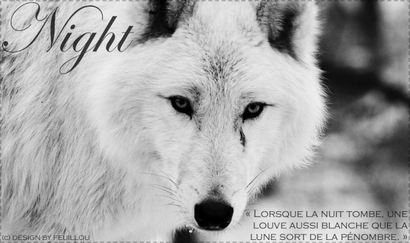 A 10 j'offre une rose a .... - Page 4 663945550037beautifulwhitewolfpcopie