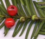 Partie Guérisseur : Les plantes de la Forêt 666776baiedif