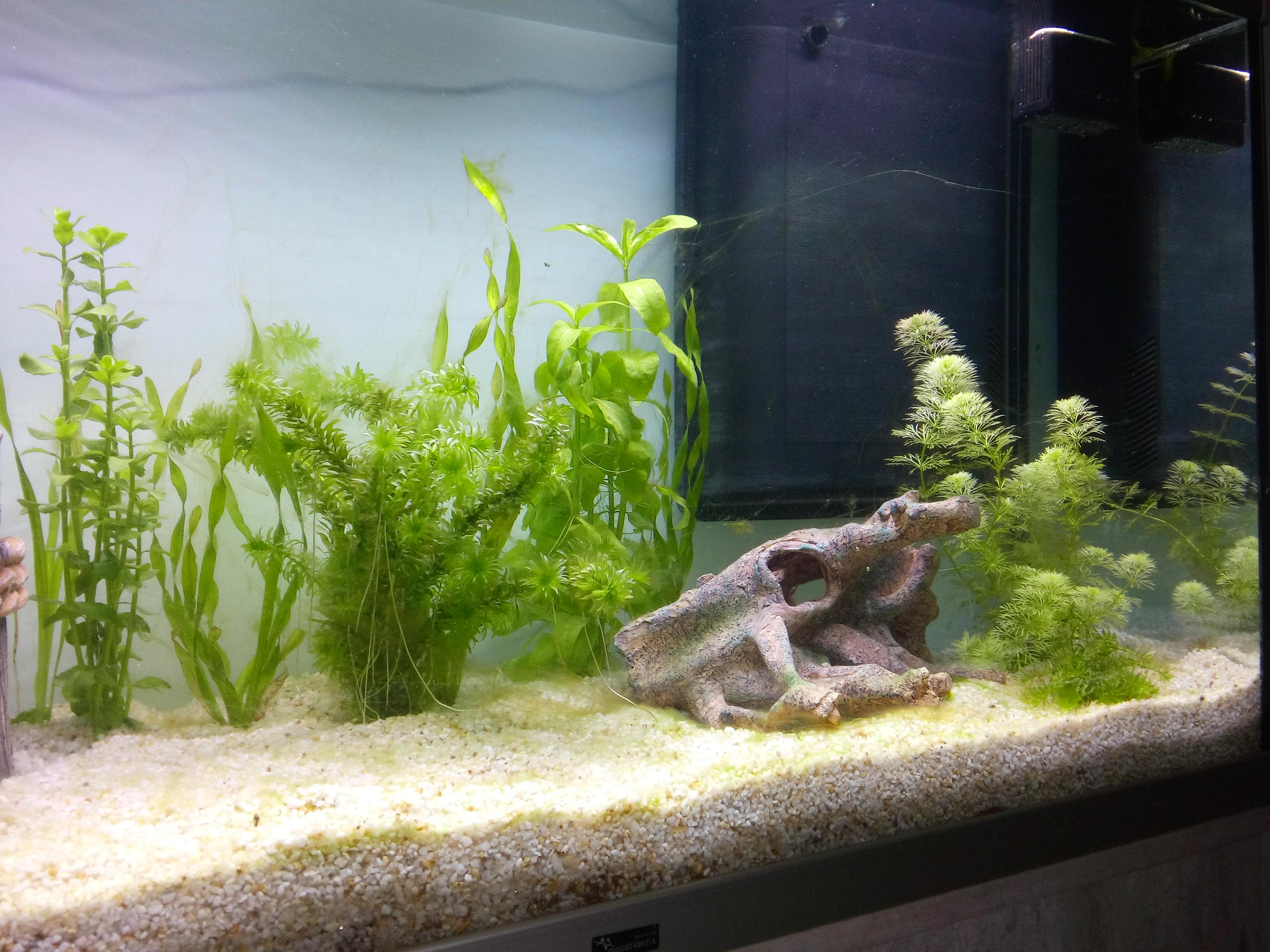 Algue aquarium 66901320160124133148