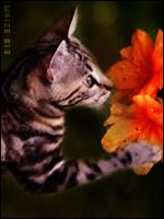 Une vague de couleurs débarque sur le forum ~ 669051image2