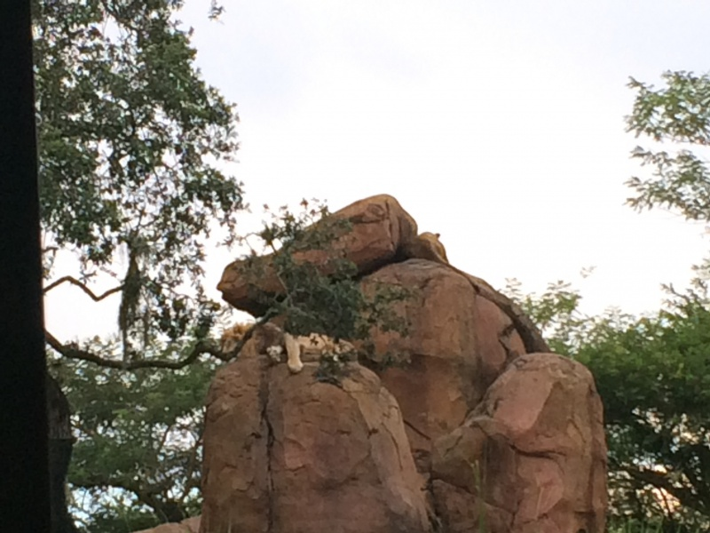 Walt Disney World + Universal Studios + Sea World + Busch Gardens Summer 2014 - Page 4 669627IMG2805