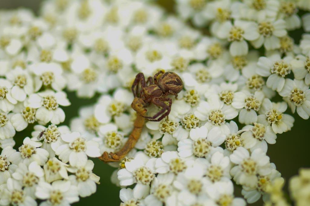 (FIL OUVERT à tous) vous aimez les araignées? 670546sanstitre7661