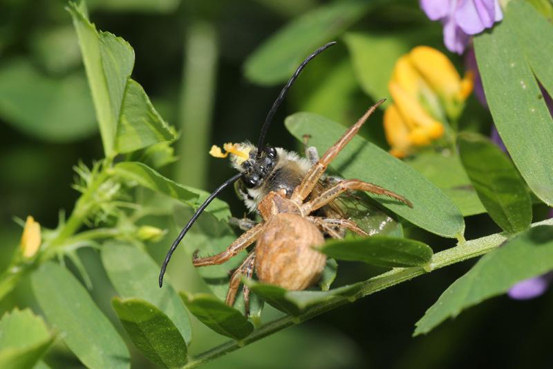 Orchidée et ... pollinisation loupée 673212004forum