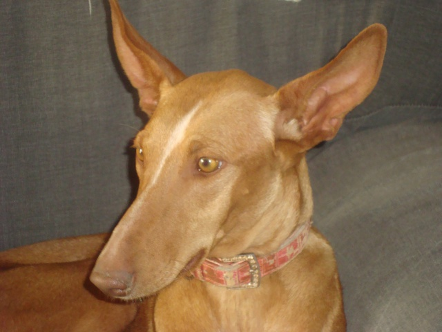 Protection des animaux: Animaux à adopter - Annonces - Page 6 675096fleur006