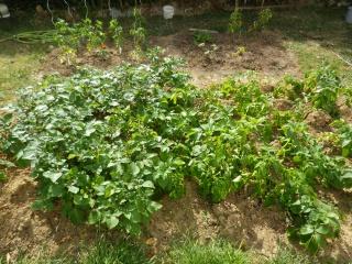 Apprentissage agraire, famille Valtin 676200IMGP1622