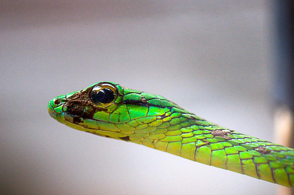 [Fil ouvert à tous] Reptiles, serpents, tortues, amphibiens, ... - Page 2 677055DSC2513NEF