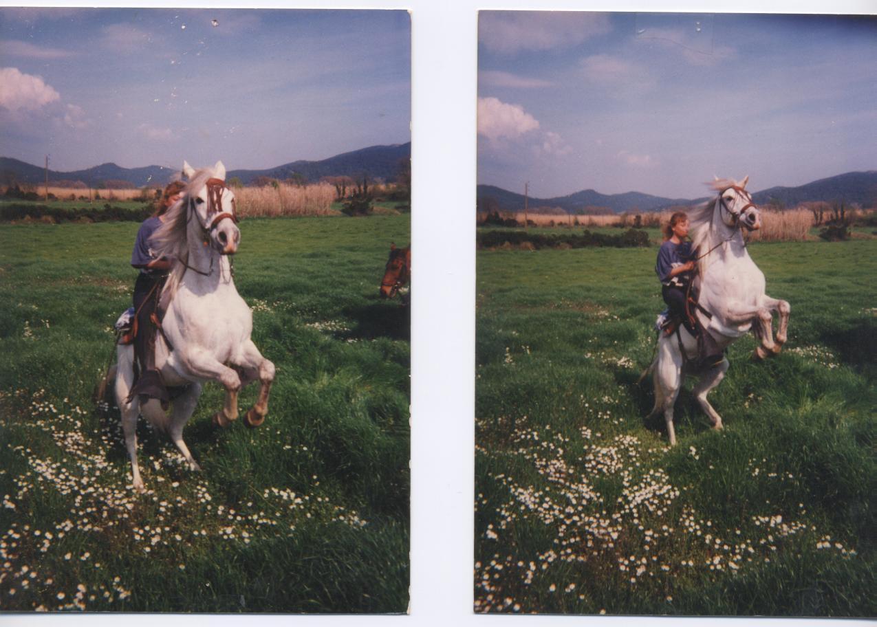 Une tumeur à la ganache a emporté mon cheval Banco. Qui a déjà vu ça ? 678025banco002