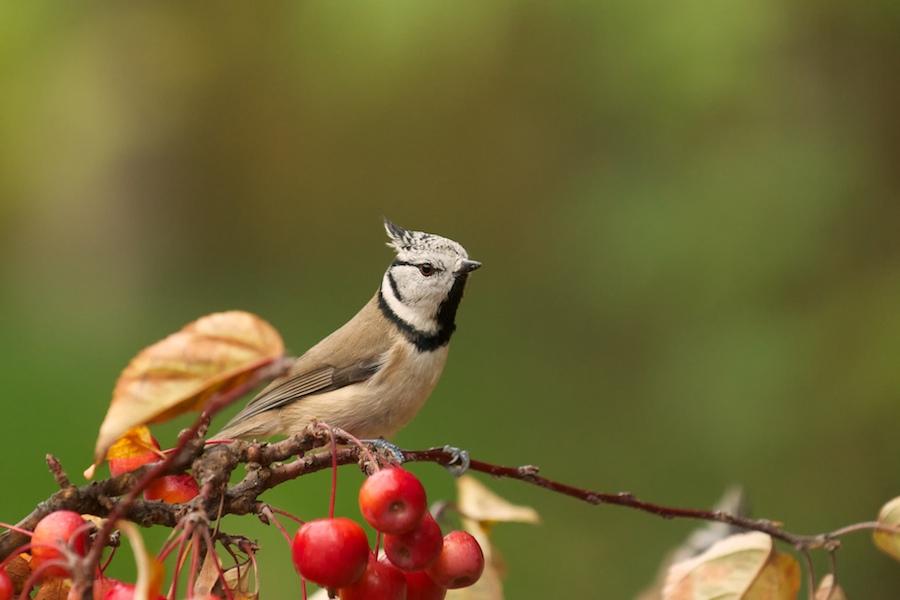 Oiseaux de mon jardin(Denis), 678039DSC3377