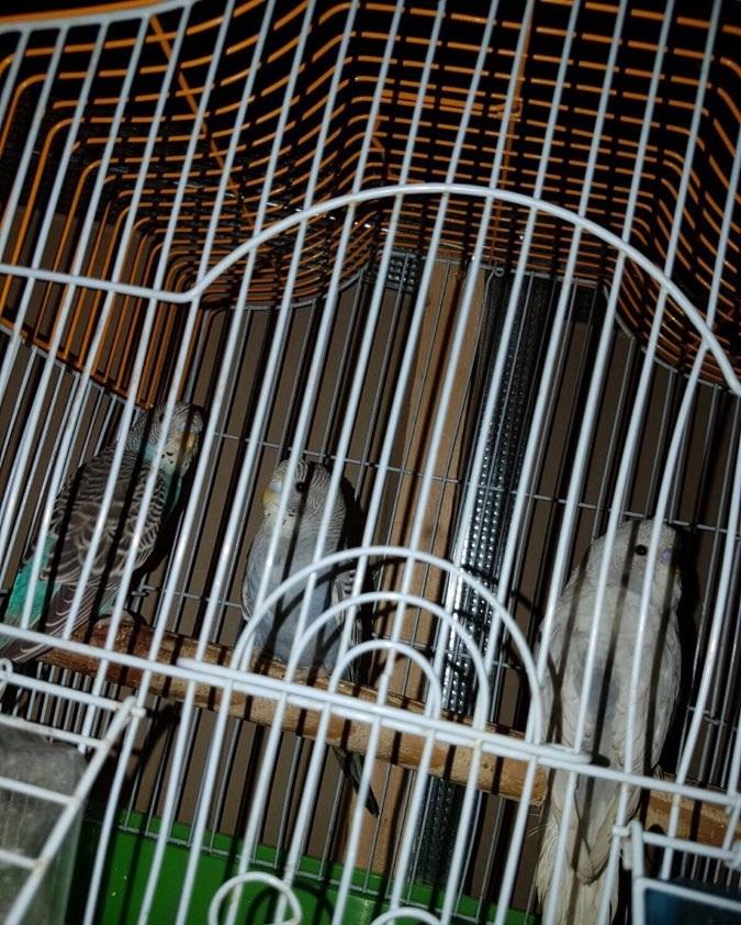 الوسم جدة على المنتدى حراج الحيوانات 678860702