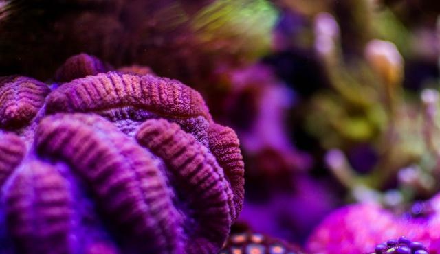 Mon premier aquarium eau de mer - Page 6 678900DSC0466