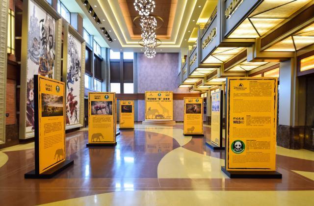 [Shanghai Disney Resort] Le Resort en général - le coin des petites infos  - Page 5 679015w443