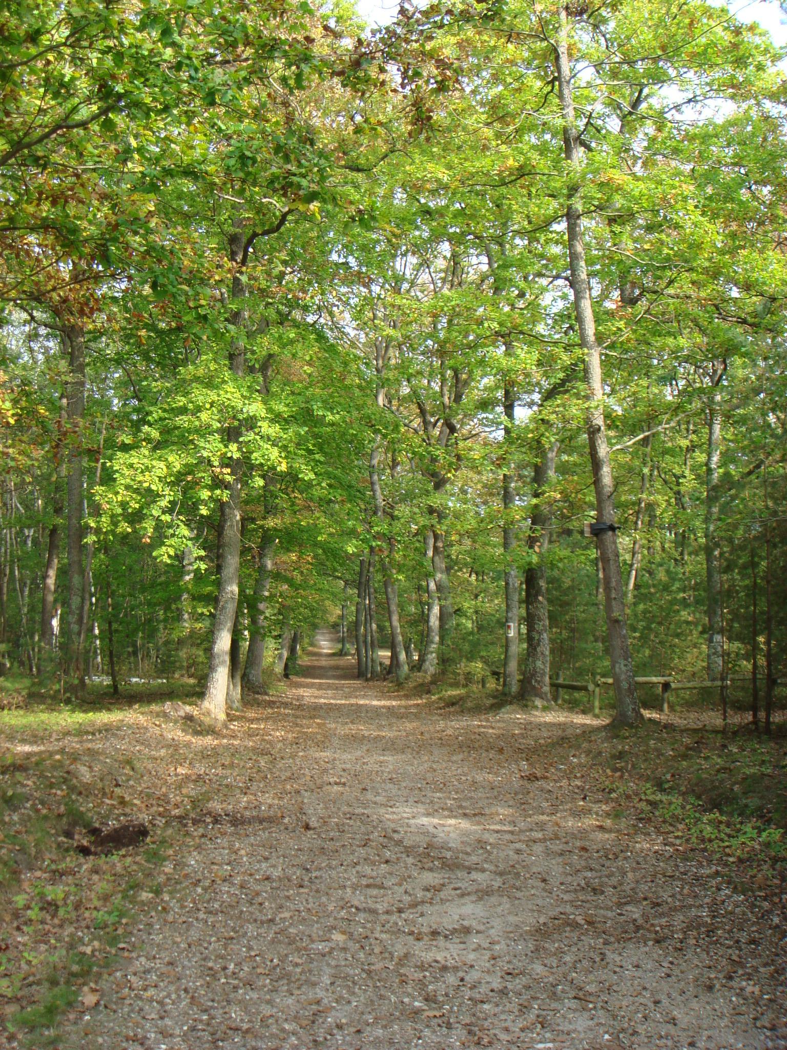 [fil ouvert] la forêt dans tous ses états 680135DSC00133