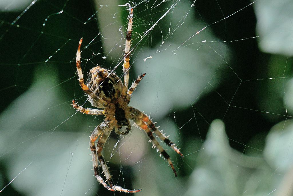 (FIL OUVERT à tous) vous aimez les araignées? 682985DSC67240904152724